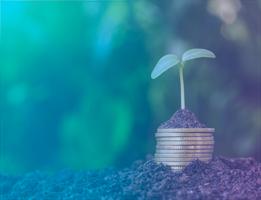 Maneiras sustentáveis de economizar na gestão